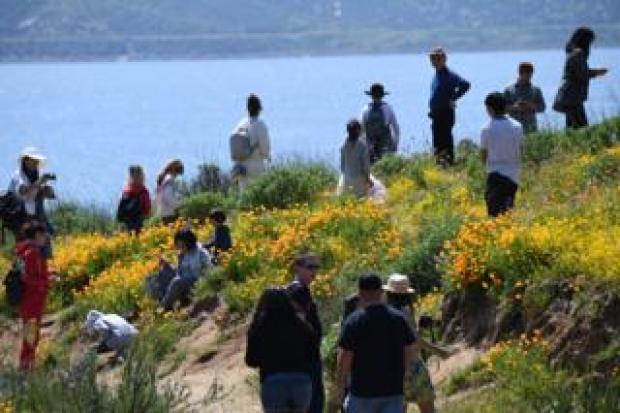 Sightseers in Diamond Valley 24 March