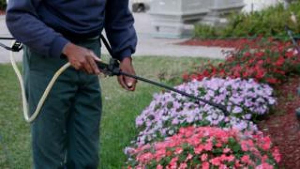 A gardener sprays plants with pesticide in Florida