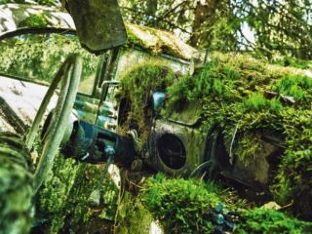 Cars: The dashboard of an abandoned car with moss and plants growing inside