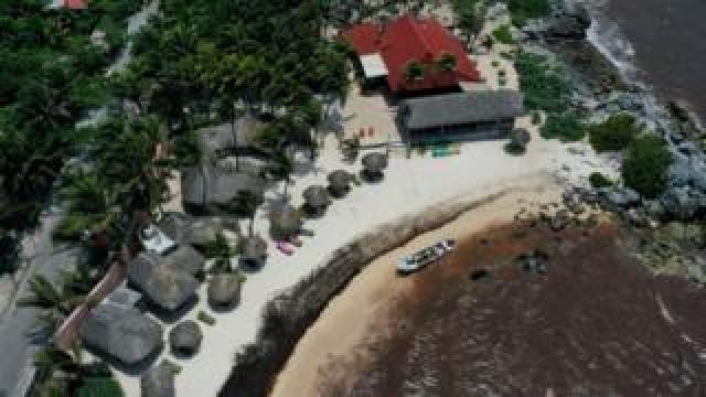 Waters near a Tulum resort are brown from sargassum, a seaweed-like algae, on 15 June
