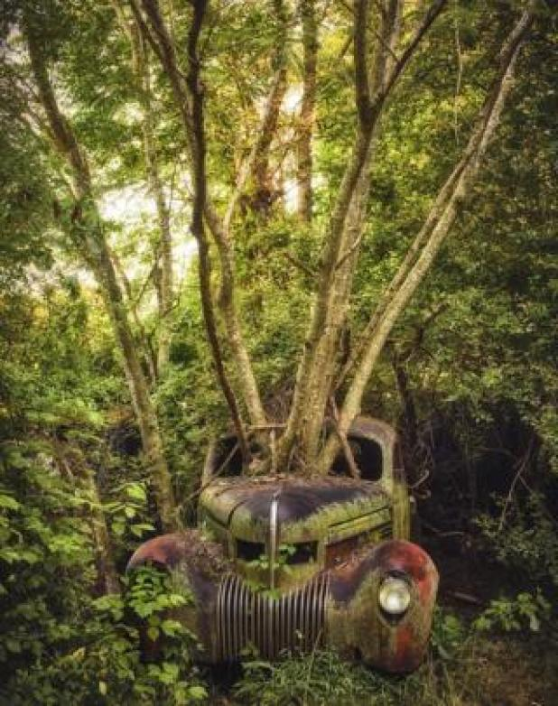 Cars: An abandoned car with a tree growing out of the bonnet