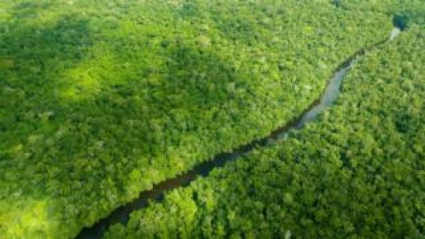 Aerial view of the Brazilian Amazon rainforest
