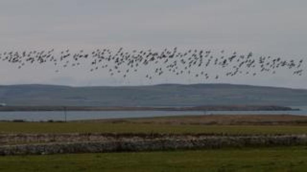 sport geese flying