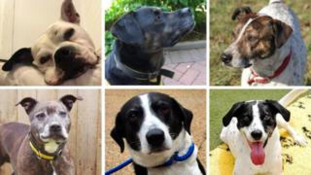 All looking for homes after multiple Christmases in rescue centres: (L-R) Buster, Lilly, Freddie, Lara, Bess and Monty.