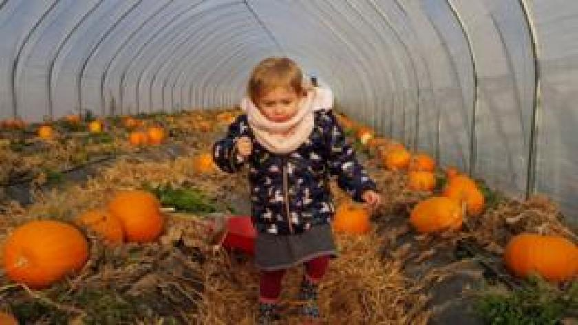Bryony picking pumpkins in Auchterarder