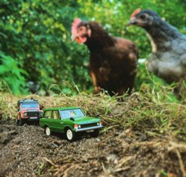 Model red and green Land Rovers watched by chickens