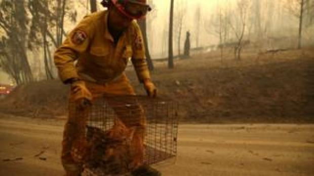 A firefighter holds a cage full of rescued cats