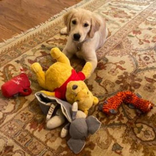 Mike Pompeo's dog Mercer, with a Winnie-the-Pooh toy