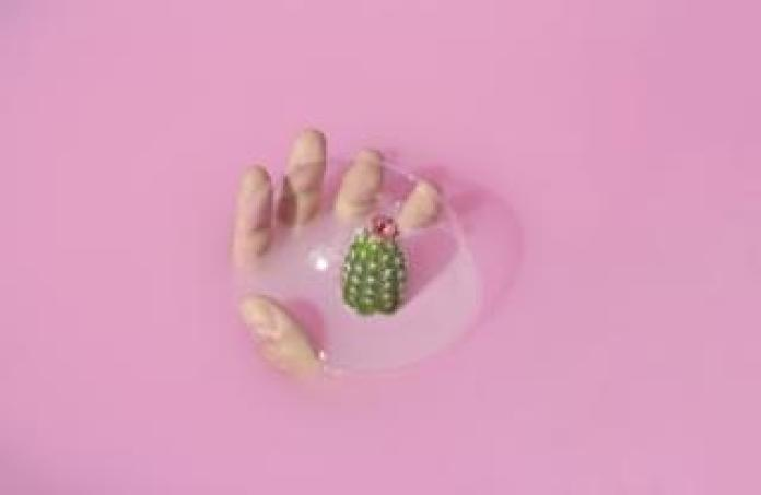 Bubble, hand and cactus