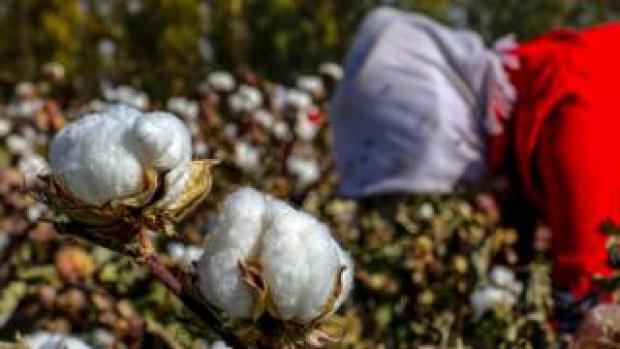 This photo taken on October 14, 2018 shows a farmer picking cotton in a field in Hami in China's northwestern Xinjiang region.