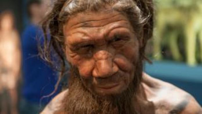 Today, humans still carry a large proportion of the Neanderthal genes