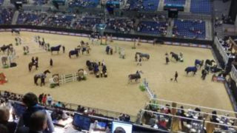 Horses at the Liverpool International Horse Show