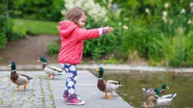 Girl throwing bread for ducks