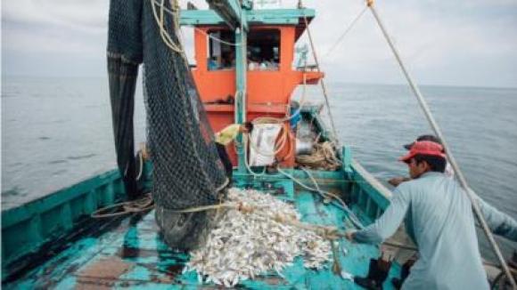 Fishermen and farmers in Asia go digital during virus.