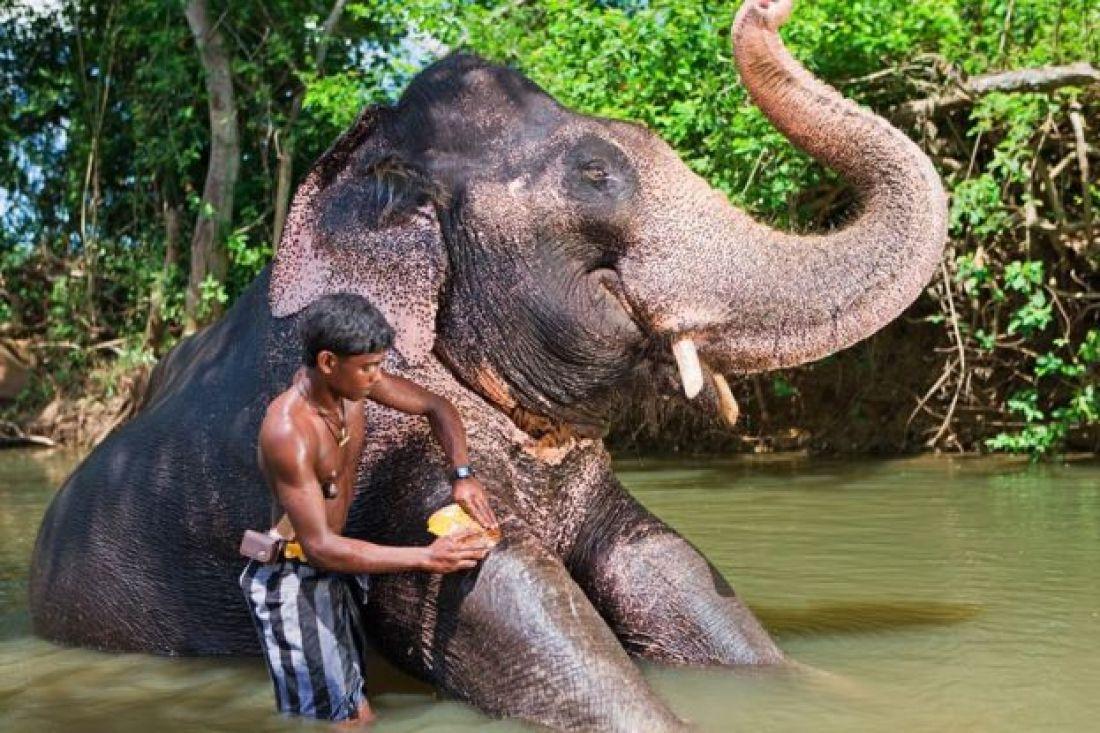 Un niño de Sri Lanka bañando a su elefante en un río,