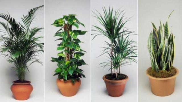 Algumas das plantas recomendadas para ter dentro de casa