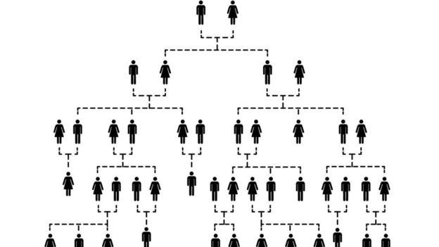 Ilustración árbol genealógico.