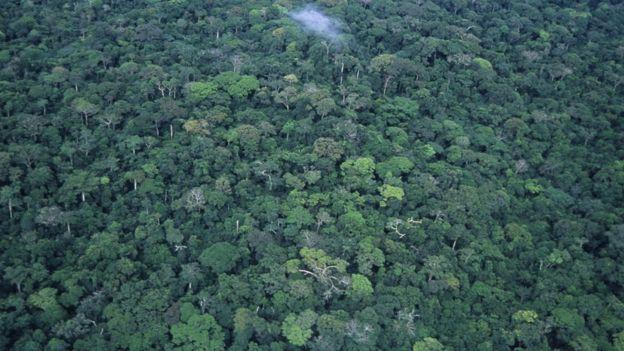 مظلة غابات مطيرة في جمهورية الكونغو الديمقراطية ، تُرى من الجو