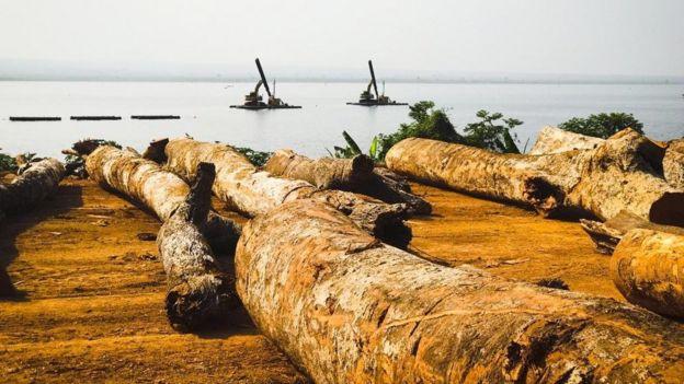 Madeira extraída do lago Volta