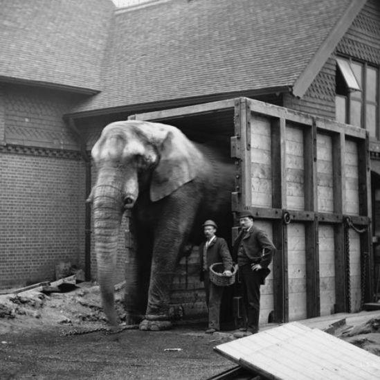 Jumbo junto a seu cuidador, Matthew Scott, e um funcionário do zoológico de Londres