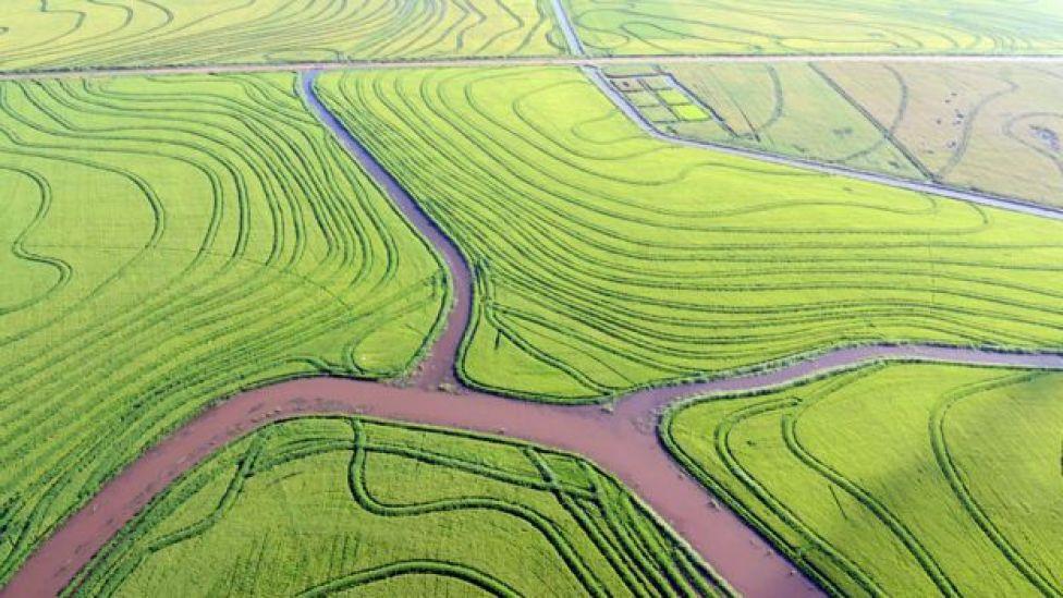 Campos con extensas plantaciones de arroz en Uruguay
