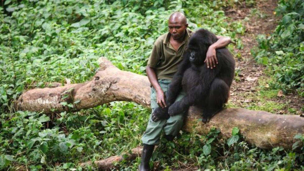 Le parc national des Virunga est la plus ancienne aire protégée du pays
