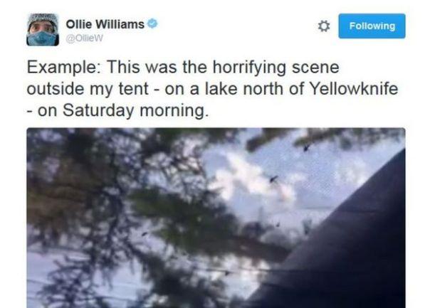 Captura de la cuenta de Twitter de Ollie Williams.
