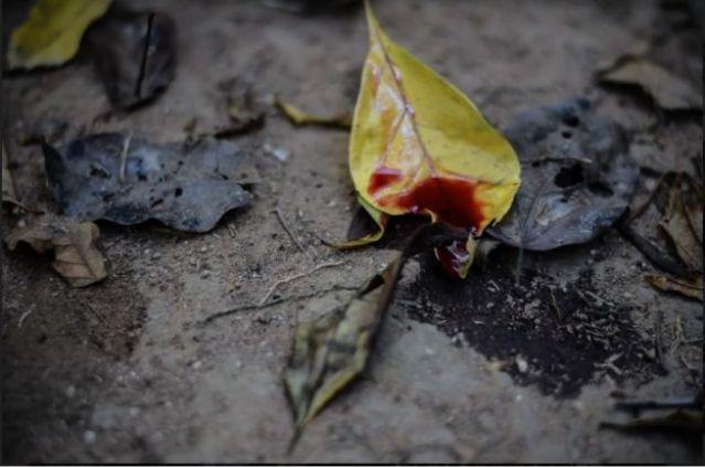 Gotas de sangue sobre folha caída na terra, simbolizando um ritual chamado Plantar a Lua