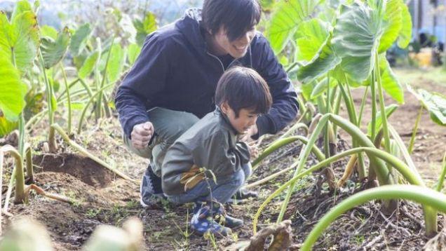 Pai e filho observam plantas