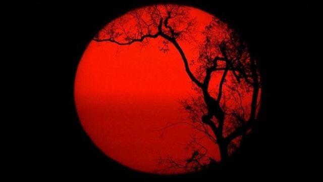 Sol com silhueta de árvore à frente