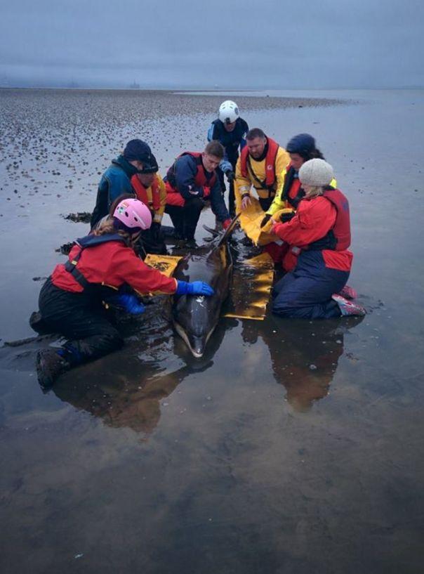 Un equipo de expertos y voluntarios logró rescatar al animal.