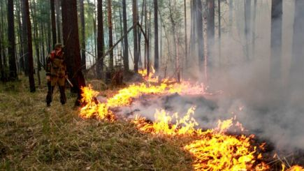 Bombeiro observa o fogo se espalhando na floresta
