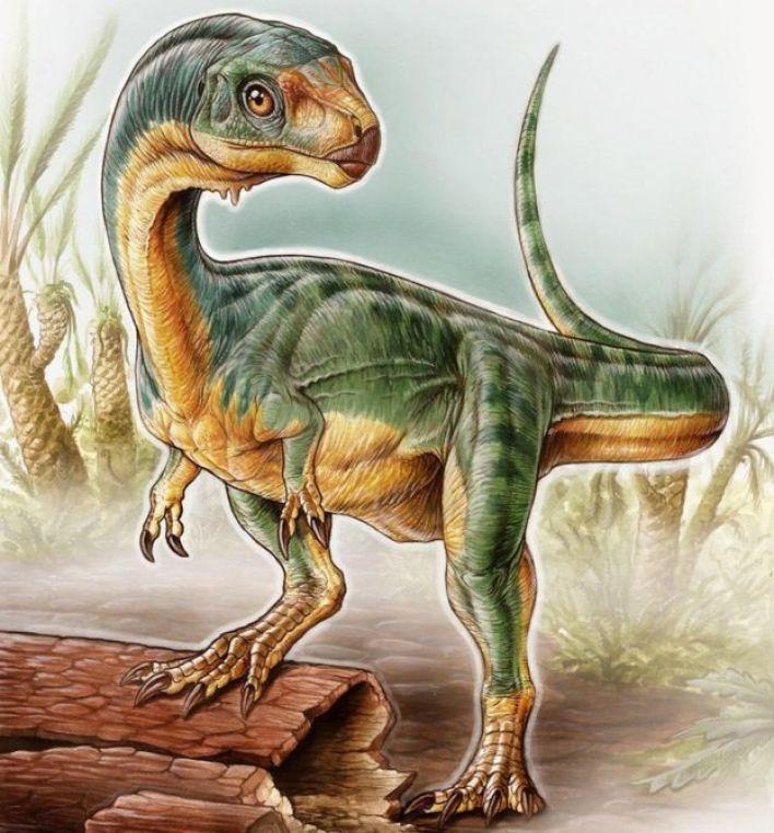 تشيليسورس عاش في نهاية العصر الجوراسي قبل 145 مليون سنة