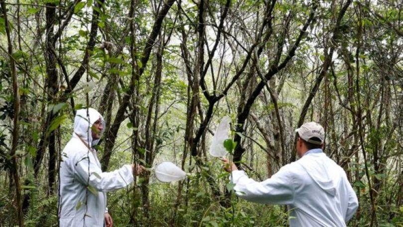 Agentes coletam mosquitos em parque Anhanguera, em São Paulo