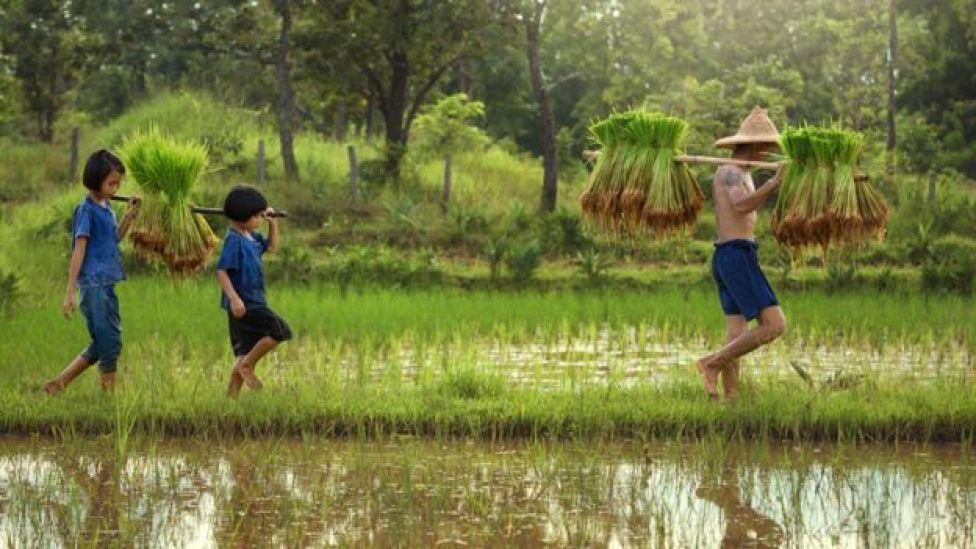Niños siguiendo a su padre agricultor en una plantación de arroz en Asia
