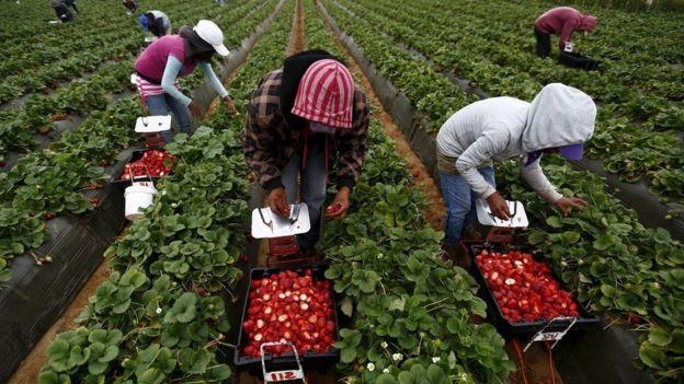 Campesinos en su jornada laboral