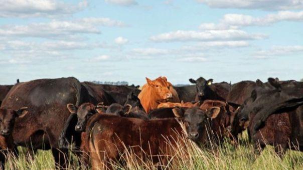 El distintivo de la carne argentina siempre fue que era de vacas alimentadas con pasto, pero eso ha ido cambiando.