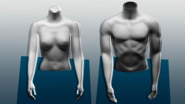 Les hommes ont tendance à avoir un pourcentage de masse musculaire plus élevé que les femmes en raison de leurs hormones.