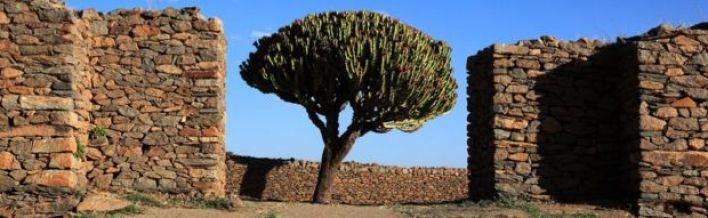 شجرة في مدينة أسكوم