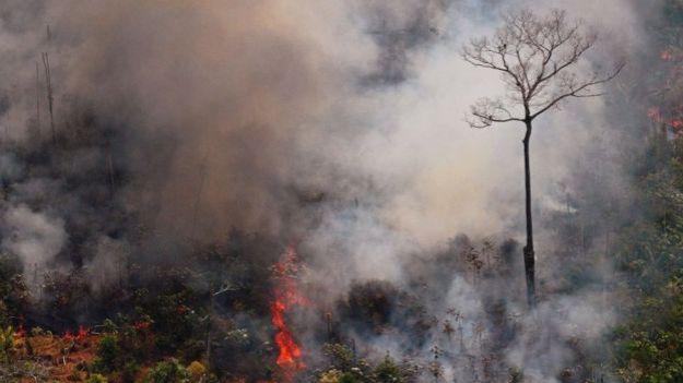 Amazonas tras los incendios, 23 agosto 2019