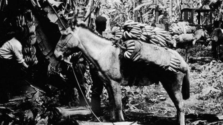 Plantación bananera de inicios de siglo en Centroamérica