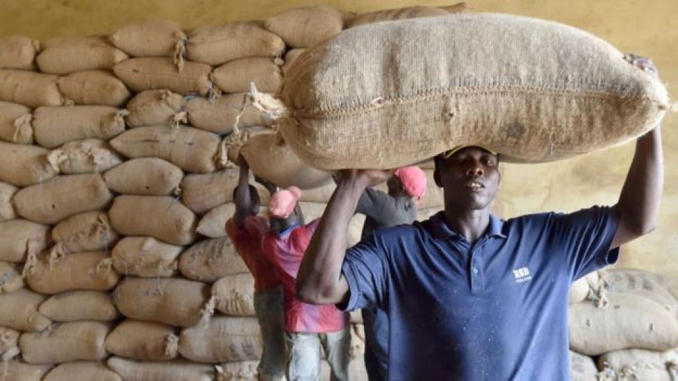 Man carry sack of cocoa beans