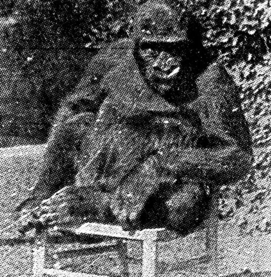 O gorila de Uley