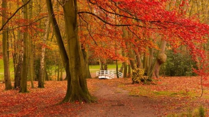 متنزه في الخريف