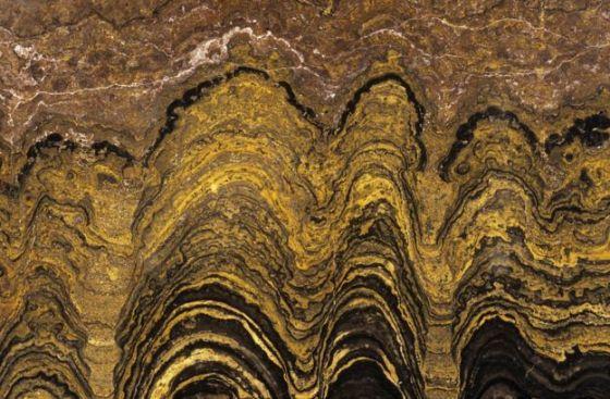 Fossilised stromatolite