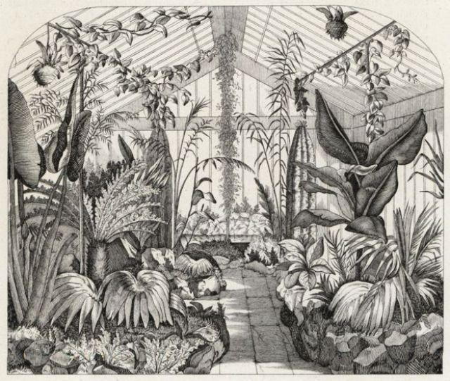 El interior del invernadero de helechos de Nathaniel Ward, presentado en Flowers of the Gardens and Hothouses of Europe, publicado en 1851.
