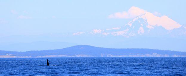 Mar de Salish