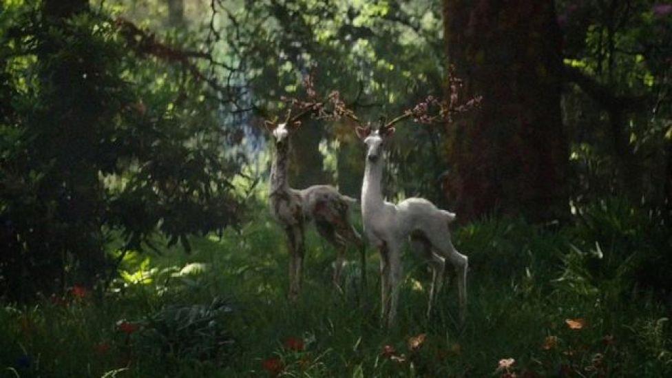 En la película Aniquilación, la naturaleza está deformada pero a menudo es extrañamente bella