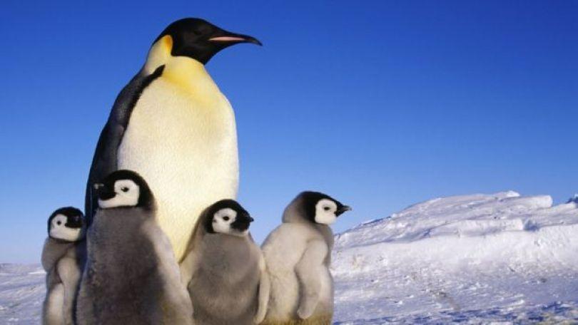 Pinguins em uma paisagem de gelo