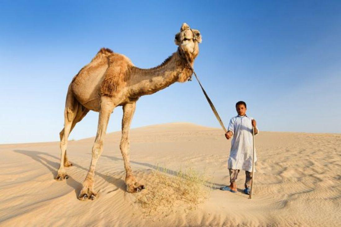 Beduino con un camello en la parte occidental del desierto del Sahara en Egipto.
